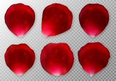 Collection of rose petals with drops of dew Royalty Free Stock Images