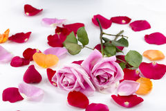 Collection of rose petals with pink roses on top Stock Photo