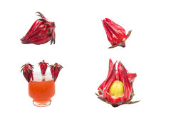 Collection of roselle images Stock Image