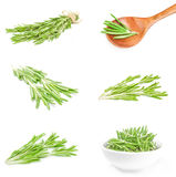 Collection of rosemary isolated on a white background cutout Stock Image