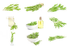Collection of rosemary on a white background Royalty Free Stock Photos
