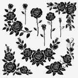 Collection of roses vector illustration
