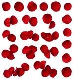 Collection rouge de pétale de rose d'isolement   Photo stock