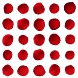Collection rouge de pétale de rose d'isolement sur le fond blanc Photo libre de droits