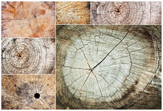 Collection of rough wooden cut texture and cracks pattern Royalty Free Stock Photos