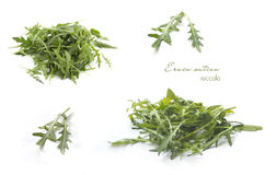Collection of rucola on white Stock Photos