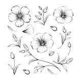 Collection of sakura flowers, set Royalty Free Stock Photos