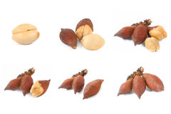 Collection of Salak snake fruit on white background Royalty Free Stock Photos