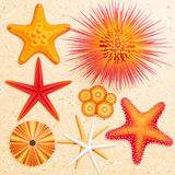 Collection on sand background. Starfish and sea urchins collection on sand background. Vector illustration Stock Photos