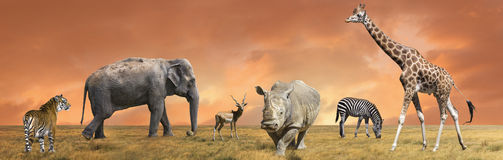 Collection sauvage d'animaux de la savane Images libres de droits