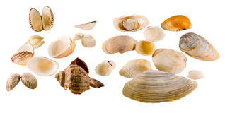 Collection of sea colored shells, close up isolated, white background Stock Image