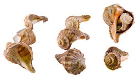Collection of sea colored shells, close up isolated, white background Stock Photo