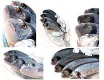 Collection of sea fish Royalty Free Stock Image