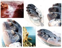 Collection of sea fish and cliffs Stock Photo