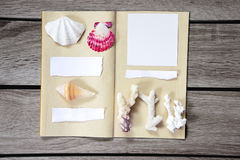 Collection of sea shells Stock Image