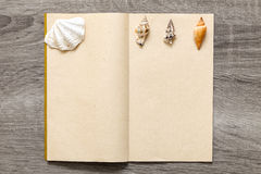 Collection of sea shells Stock Photography