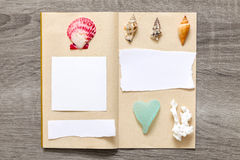 Collection of sea shells Stock Images