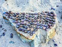 A collection of sea shells. Royalty Free Stock Photo