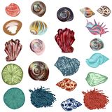Collection of  sea shells for design in hand drawn detailed realistic style stock photography