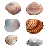 Collection Sea shells isolated on white Royalty Free Stock Photo
