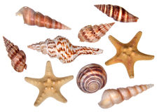 Collection of sea shells Royalty Free Stock Photography