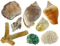 A collection of sea shells Royalty Free Stock Photos