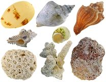 A collection of sea shells Stock Photography