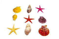 Collection of sea shells Royalty Free Stock Images