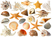 Collection of sea shells. Isolated sea objects. Large collection of sea shells and stars isolated on white background royalty free stock photos