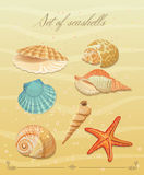 Collection of sea shells. Vector set. Royalty Free Stock Image