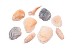 Collection of sea shells on white Stock Images