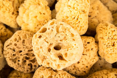 Collection of sea sponges in Florida Royalty Free Stock Image