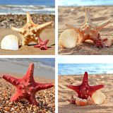Collection of sea stars, shells Stock Photo