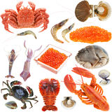 Collection of seafood Stock Photo