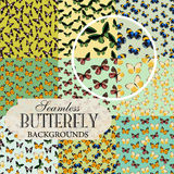Collection of seamless backgrounds on the topic of butterflies Stock Photography