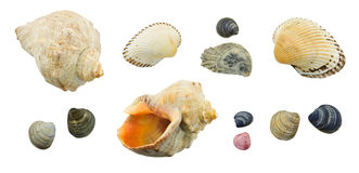Collection seashell Stock Photo
