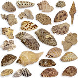 Collection seashell Royalty Free Stock Photo
