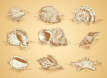 Collection seashell Royalty Free Stock Image