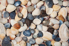 Collection of seashell for background, natural macro texture Royalty Free Stock Photos