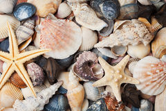 Collection of seashell and starfish for background, natural macro texture, top view Royalty Free Stock Photos