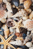 Collection of seashell and starfish for background, natural macro texture, top view Royalty Free Stock Photography