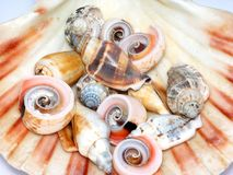 Collection of seashells  Stock Images
