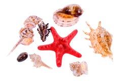Collection of seashells Stock Photography