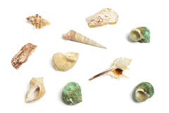 Collection of Seashells Stock Photos