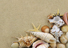 Collection of seashells. On sand background royalty free stock image