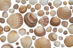 Collection of seashells Stock Image
