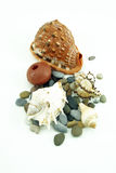 Collection of seashells Royalty Free Stock Photography