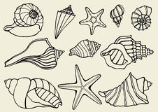 Collection of seashells Royalty Free Stock Photos