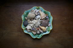 Collection of seashells in a bowl Stock Images