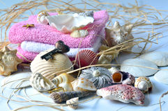 Collection of seashells. Stock Photo